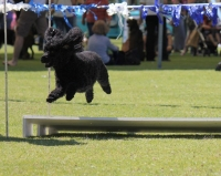 Wanneroo Dog's Breakfast 7
