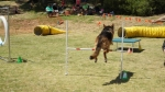 Edgewater Primary School Agility Demonstration 52
