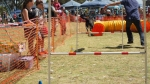 Edgewater Primary School Agility Demonstration 54