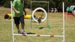 Edgewater Primary School Agility Demonstration 56