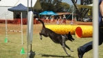 Edgewater Primary School Agility Demonstration - pep
