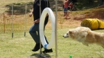 Edgewater Primary School Agility Demonstration - zoom