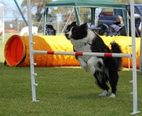 Wanneroo Dog's Breakfast 10