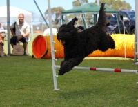 Wanneroo Dog's Breakfast 11
