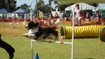 Wanneroo Dogs Breakfast 10