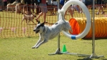 Wanneroo Dogs Breakfast 5