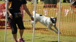 Wanneroo Dogs Breakfast 17