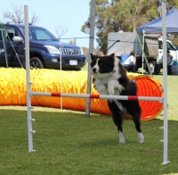 Wanneroo Dog's Breakfast 13