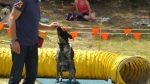 Edgewater Primary School Agility Demonstration 4