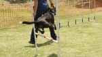 Edgewater Primary School Agility Demonstration 5