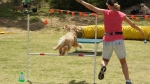 Edgewater Primary School Agility Demonstration 8