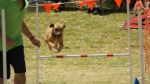 Edgewater Primary School Agility Demonstration 14