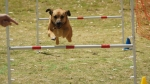 Edgewater Primary School Agility Demonstration 15