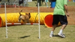 Edgewater Primary School Agility Demonstration 16