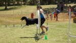 Edgewater Primary School Agility Demonstration 23