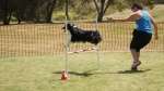 Edgewater Primary School Agility Demonstration 24