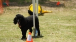 Edgewater Primary School Agility Demonstration 27
