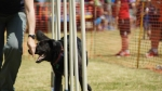 Edgewater Primary School Agility Demonstration 33