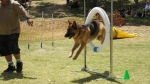 Edgewater Primary School Agility Demonstration 39