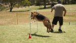 Edgewater Primary School Agility Demonstration 40