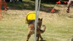 Edgewater Primary School Agility Demonstration 41