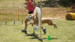 Edgewater Primary School Agility Demonstration 43