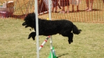 Edgewater Primary School Agility Demonstration 45