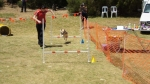 Edgewater Primary School Agility Demonstration 48